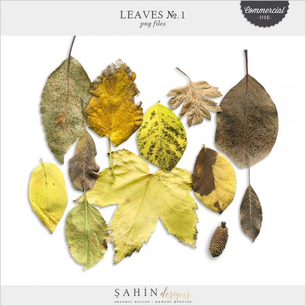 Extracted digital dry leaves | Commercial use digital scrapbook | Sahin Designs