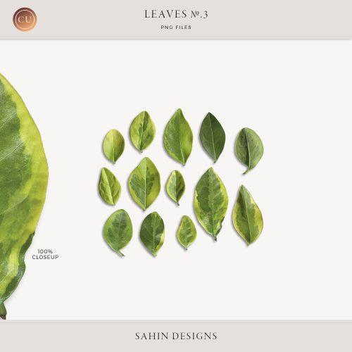 Extracted Golden Privet Evergreen Leaves - Sahin Designs - CU Digital Scrapbook
