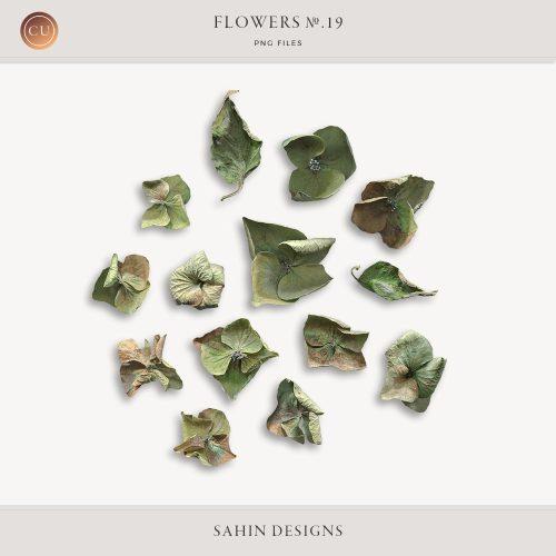 Extracted dry hydrangea flowers - Sahin Designs - CU Digital Scrapbook