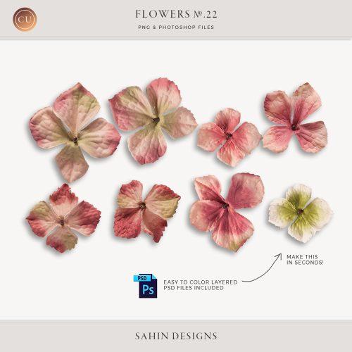 Extracted pink velvet hydrangea flowers - Sahin Designs - CU Digital Scrapbook