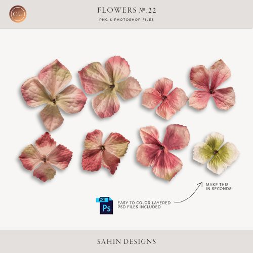 Extracted pink velvet hydrangea flowers - Sahin Designs - CU Digital Scrapbook