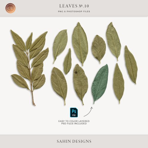 Extracted Dry Leaves - Sahin Designs - CU Digital Scrapbook