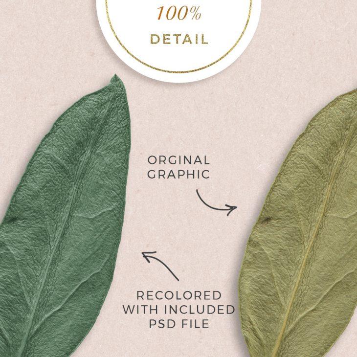 Extracted Dry Leaves - Sahin Designs - CU Digital Scrapbook