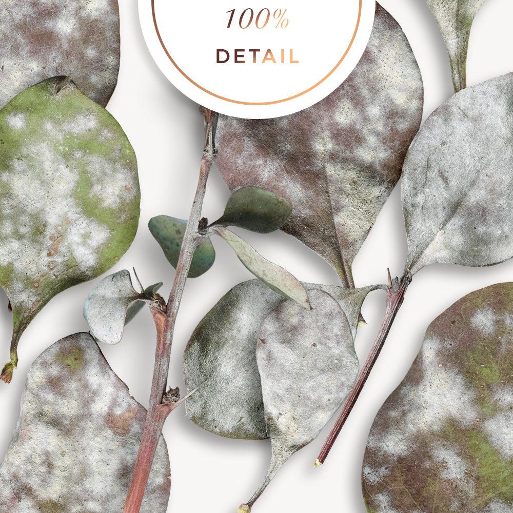 designer resources, sahin designs, extracted autumn leaves, autumn leaf, digital leaf, leaf image, commercial use digital scrapbook, cu digital scrapbook, digital scrapbook supplies