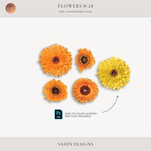Extracted Pot Marigold Flowers - Sahin Designs - CU Digital Scrapbook