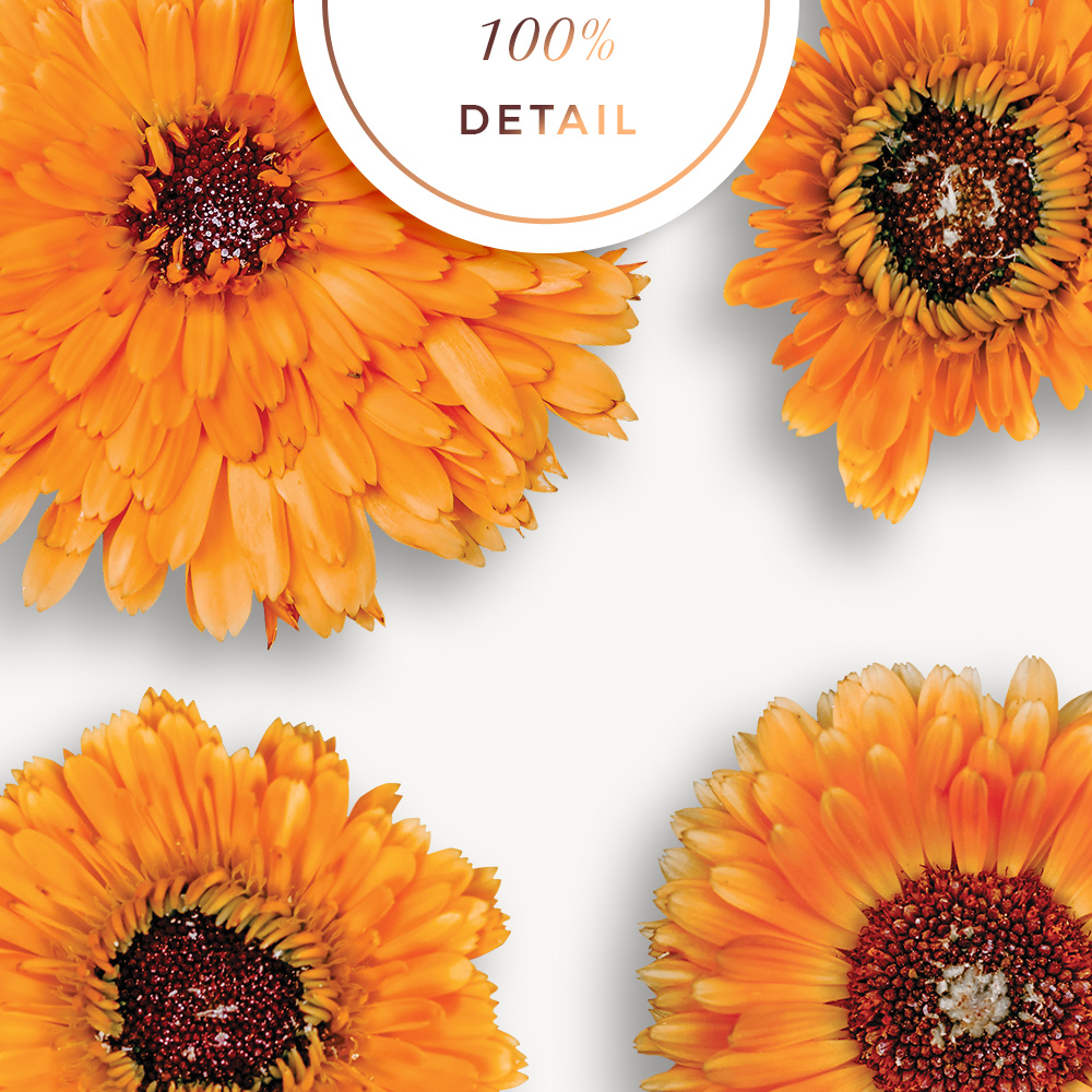 Extracted Pot Marigold Flowers - Sahin Designs - CU Digital Scrapbook