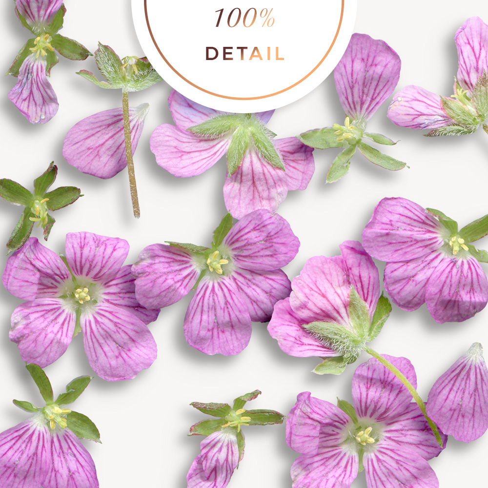 Extracted erodium flowers - Sahin Designs - CU Digital Scrapbook