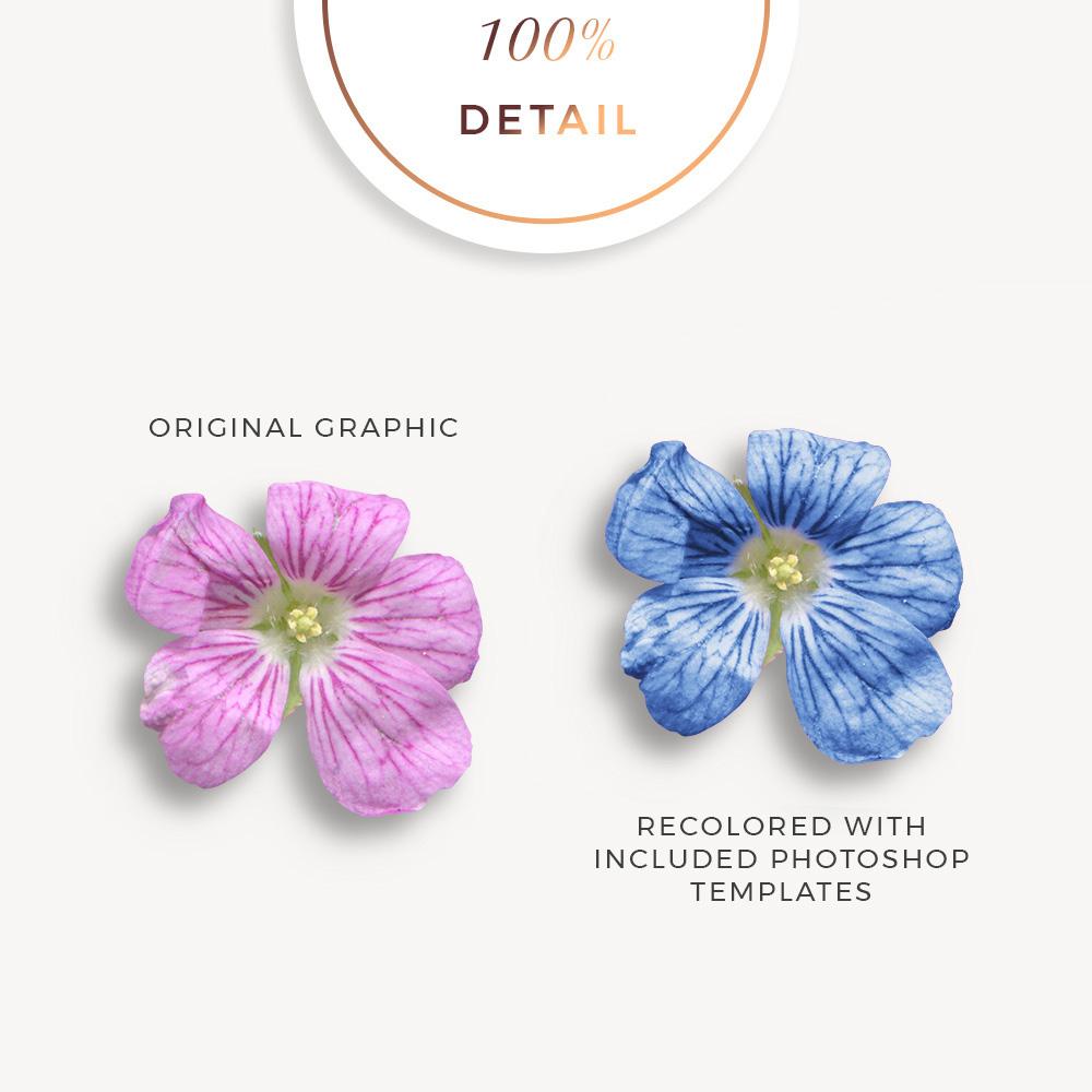 Extracted erodium flowers - Sahin Designs - CU Digital Scrapbook