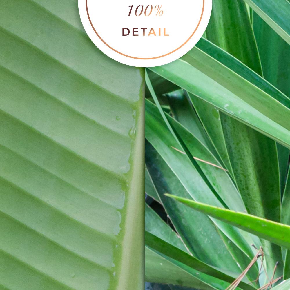 Tropic plant textures - Sahin Designs - CU Scrapbook