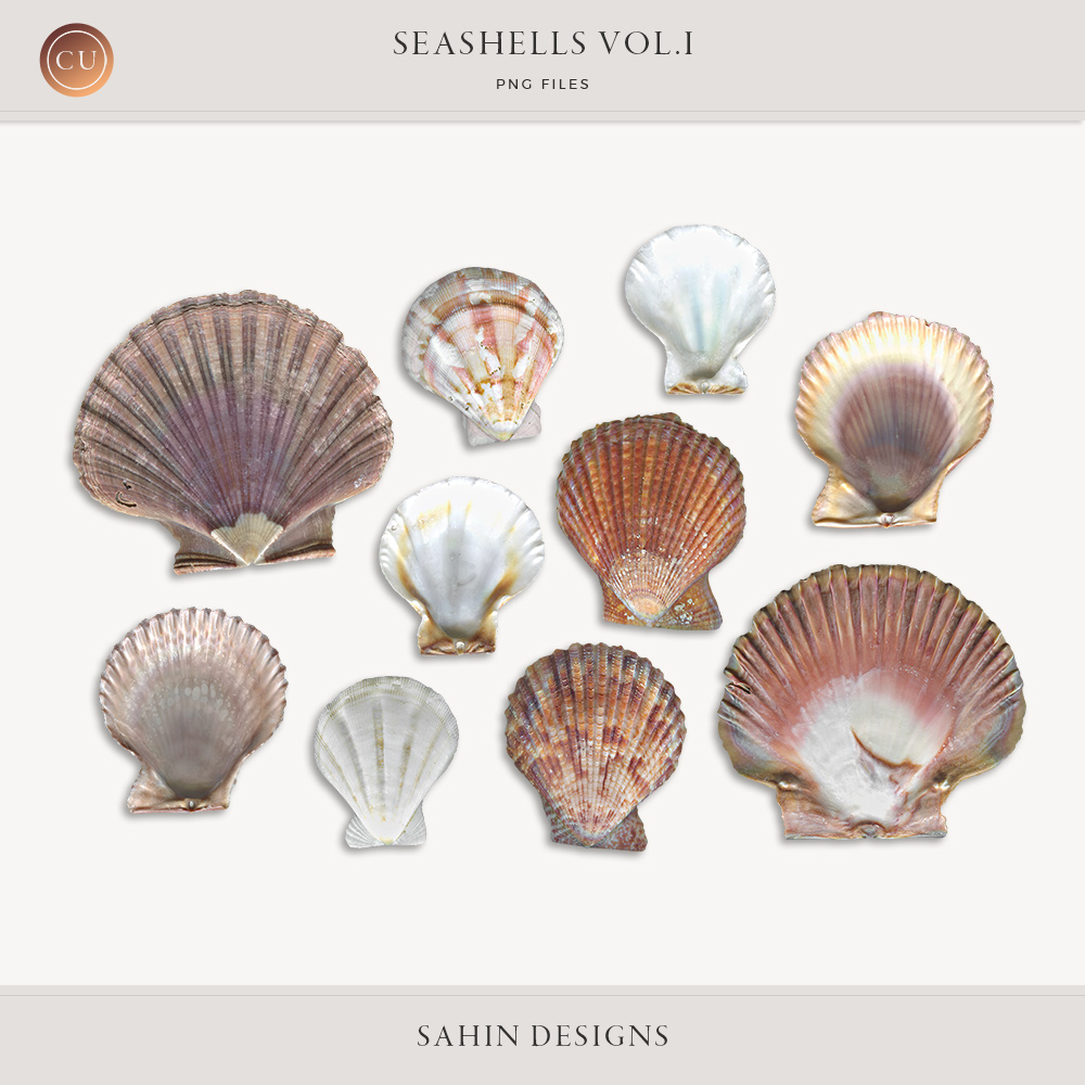 Extracted seashells - Sahin Designs - CU Scrapbook