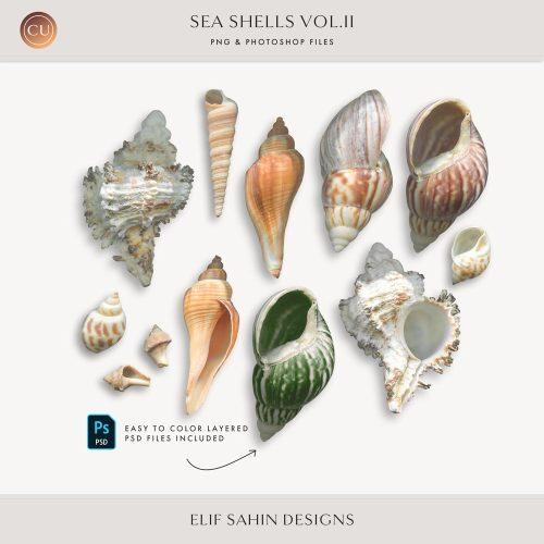 Extracted Seashells - Sahin Designs - CU Digital Scrapbook
